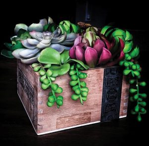 Succulent cigar box